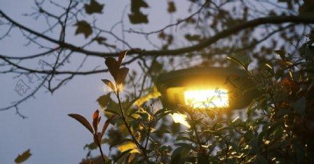 路灯树木图片