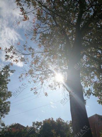 午后路边明媚的阳光图片