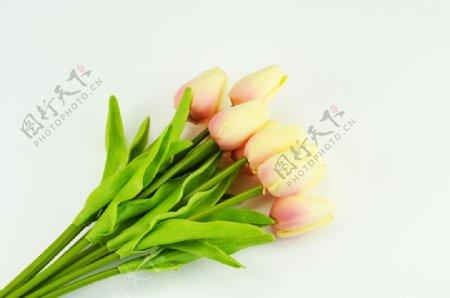 白色底板上的黄色郁金香花束图片