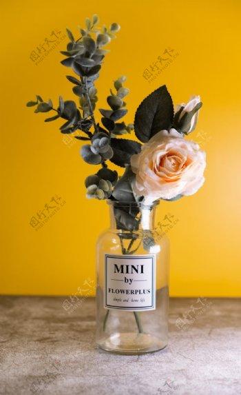 花瓶里的玫瑰特写图片