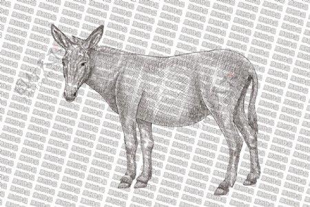 素描驴图片