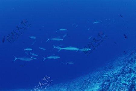 大海深处图片