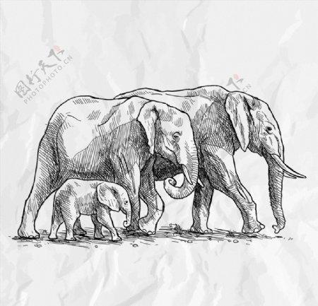 大象手绘矢量素材图片