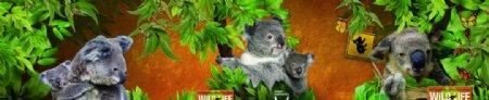 考拉树熊图片