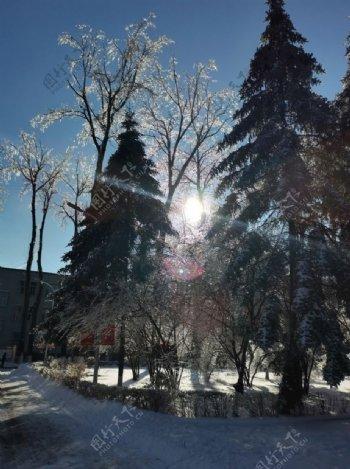 树木之中的太阳图片