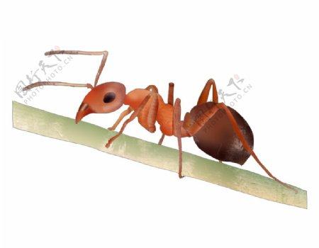 手绘蚂蚁图片