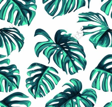 热带树叶图片