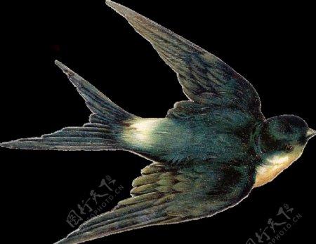 燕子图片水墨山水春天白鹤海报