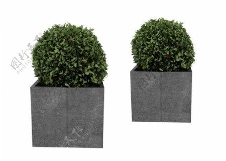 球形植物盆栽3d模型图片