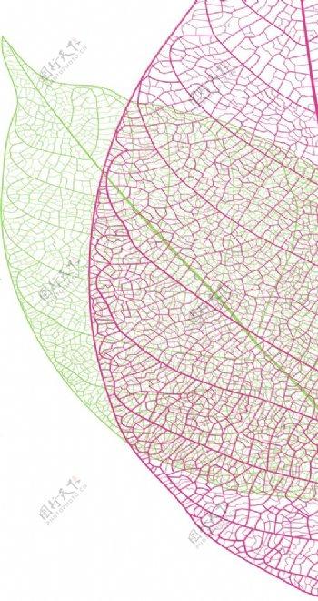 叶子纹理图片
