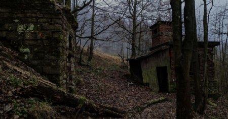 森林小屋树木草地落叶图片