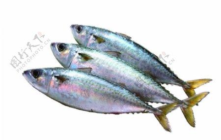 海鲜鱼类海鱼透明免抠素材图片