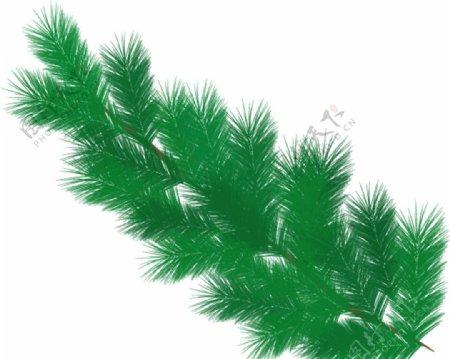 圣诞树枝图片