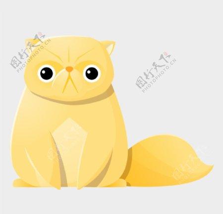 黄色的小猫图片