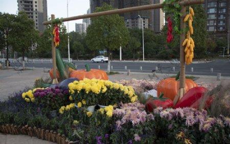玉米菊花图片