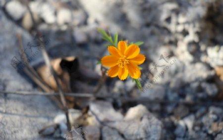 石缝中的小花图片