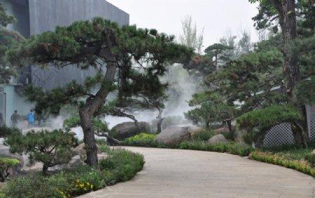 园林常绿树种造型油松图片