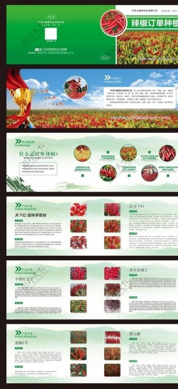 农业绿色辣椒画册种植图片
