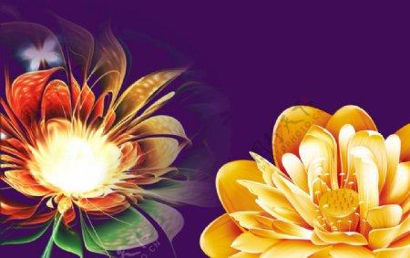绽放花朵图片